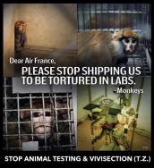 Laboratory testing - Please stop torturing us